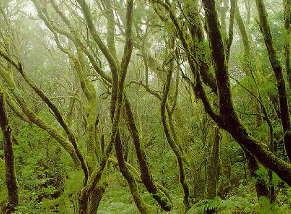 arbrehoriz